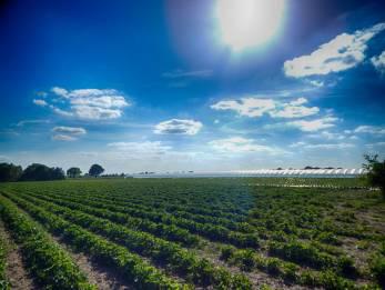 Erdbeerfeld 3